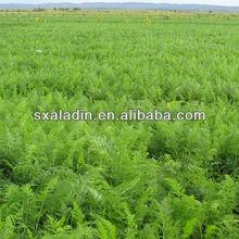 Herbal Glabridin Licorice Extract root powder/liquorice P.E