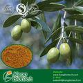 puro de oliva extracto de hoja de la medicina a base de hierbas