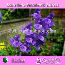 100% natural radix scutellariae extract manufacturer / 30% baicalin