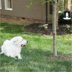 Bird Cage Shape Stop Barking Control Outdoor Ultrasonic Bark Control