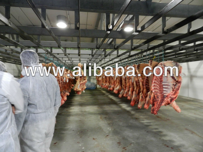 EXPORT BEEF FROM AUSTRALIA -2,000 TONS -5,000 TONS -10,000 TONS