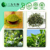 High Quality Powdered Green Tea, 100% Natural Green Tea Extract Polyphenol Plant Extract Green Tea Powder