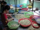 Plain cashew nuts W320, W240 from Vietnam