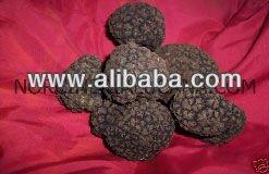 aphrodisiac BLACK ITALIAN TRUFFLE TUBER UNCINATUM