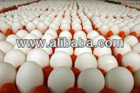 Eggs,poultry eggs,farm fresh white eggs,