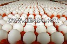 Eggs,poultry eggs,farm fresh white eggs,