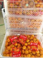 Baby mandarin/ Fresh mandarin orange/Chinese baby mandarins