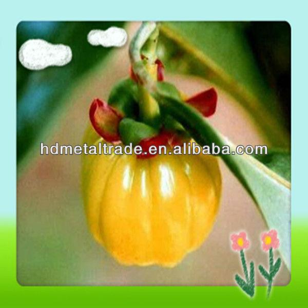 garcinia cambogia fruit extract promotion