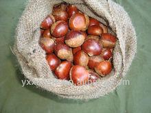 2014 crop shelled chestnut