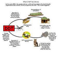 DDT 75 WP