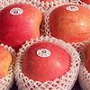 best price fuji apple in best package