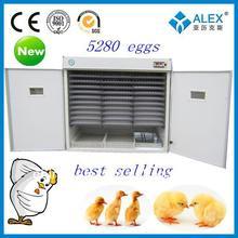 2013 nueva CE aprobaron codornices de pollo matadero de venta con buen precio