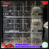 2013High Quality Chicken layer Cage (Anping Factory China Mainland)