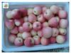 Wholesale royal gala apples