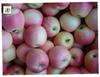 Apple fruit gala apple