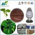 natürlichen yohimbin pulver professionelle hersteller