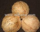 Coconut Exporters