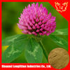High Quality Red Clover Extract For Free Sample / 8%,20%,40% Isoflavones