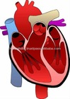 Natural Ayurvedic Products For Heart Care