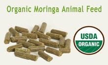 Moringa Cattle Feed Companies