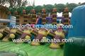 venta caliente de pvc inflable obstáculo curso sobre tierra