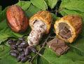 estándar de cacao
