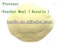 Microbe proteasa! Harina de plumas, Soybeal comida, Harina de pescado etc de hidrógeno con alta eficiencia