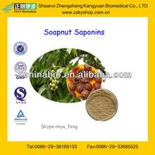 GMP Factory Supply Natural Soapnut Saponins