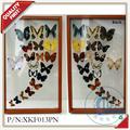 real fousen mejor calidad de secado de la mariposa decoración de hogar de laimagen