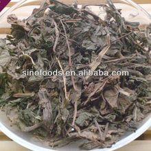 yu xing cao herbalife products houttuynia herb