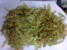 Tilia cordata flores