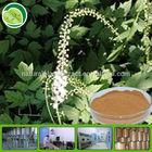 triterpene glycosides powder black cohosh extract black cohosh root p.e