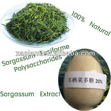 GMP Manufacturer Seaweed Powder/Sargassum Seaweed/Seaweed Extract