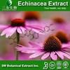 GMP&ISO Echinacea Herb Extract/Echinacea Purpurea Extract/Echinacea Extract