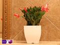 Pequeno vaso quadrado de plástico, proteçãoambiental ao embelezamento