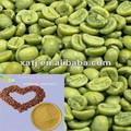 verde granos de café en polvo extracto de brasil