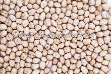 fresh kabuli chickpeas in india