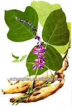 Isoflavones 40%-90% Qure Natural Radix Puerariae Lobata