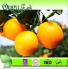 2014 Wholesale navel orange fruit price