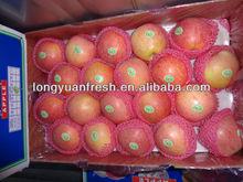 Fresh fruit Qinguan Apple new crop 9kg carton