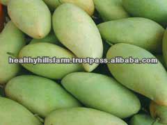 Thai Fresh Green Mango fruit Wholesale