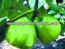 guava fruit tree bag