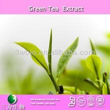 Pure 15-98% catechin powder green tea extract