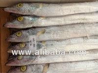 Ribbon - fish