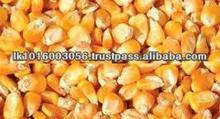Dried Yellow Corn Maize