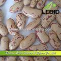 2013 coltura asciutta forma allungata fagioli borlotti di alta qualità