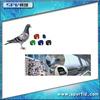 SPV Sell RFID 125Khz Pigeon Foot Ring