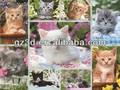 Animation de noël décorations d'intérieur 3d chat, images à imprimer