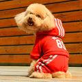 algodão inverno quente aqua azul e verde do exército vermelho ferrugem roupa do cão