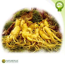 80% UV Panax Ginseng Extract /Ginseng Extract